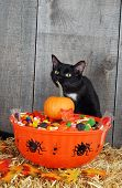 closeup of halloween candy in a bowl and black cat poster