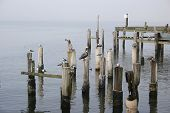 Sea birds resting on old pilings poster