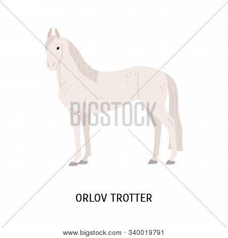 Orlov Trotter Horse Breeding Flat Vector Illustration. Famous Russian Racehorse Isolated On White Ba