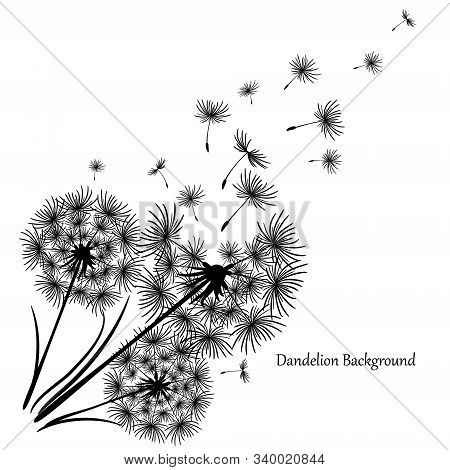 Vintage Dandelion, Great Design For Any Purposes. Dandelion Vector. Spring Blossom Background. Beaut