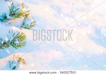 Winter Sunny Snowy Texture Background With Fir Tree Branches