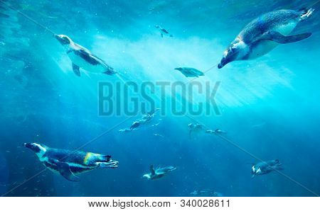 A herd of African Penguins fishing. Ocean underwater with marine animals. Sun rays passing through the water surface.