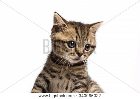 Cute Tabby Kitten Looks Surprised Isolated On White Background