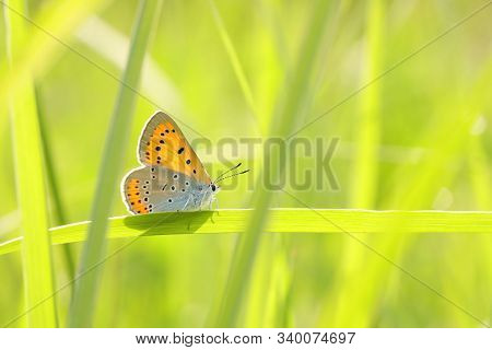 Butterfly spring morning Nature background Butterfly green grass meadow Nature background Macro Close-up Nature background summer Nature background sun sunshine Nature background Natural environment Nature background Butterflies meadow Nature background.