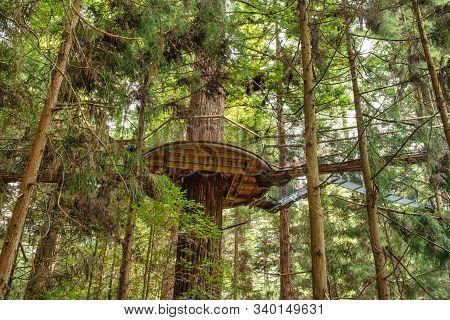 Looking Up High To The Platform And Suspended Tree Walk Bridge In The Dense Lush Redwoods Whakarewar