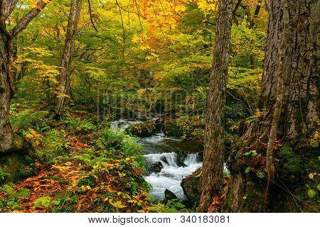 Beautiful Oirase Mountain Stream Flow Over Rocks In Colorful Foliage Of Autumn Season Forest At Oira