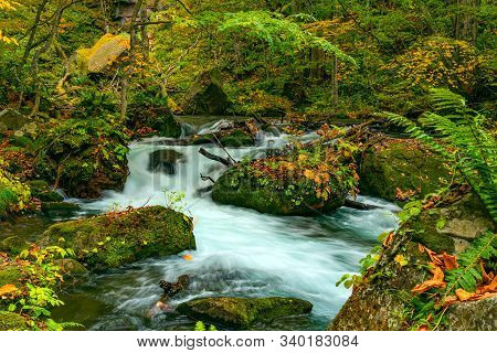 Scenic View Of Beautiful Oirase Mountain Stream Flow Passing Green Mossy Rocks Covered With Falling