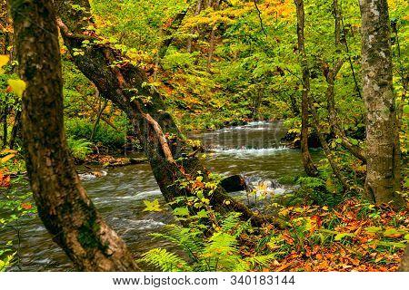 Beautiful View Of Oirase Mountain Stream Flow Through The Colorful Foliage Of Autumn Season Forest A