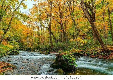 View Of Oirase Mountain Stream Flow Rapidly Passing Green Mossy Rocks In The Colorful Foliage Of Aut