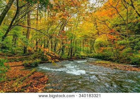 View Of Oirase Mountain Stream Flow Passing The Colorful Foliage Forest Of Autumn Season At Oirase V