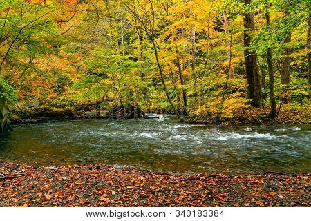 Clear Water Oirase River Flow In The Forest Of Colorful Foliage Of Autumn Season At Oirase Valley In