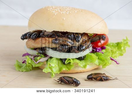 Crickets Insect For Eating As Food Items In Bread Burger Made Of Fried Insect Meat With Vegetable On