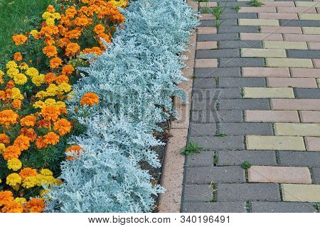 Flowerbed With Orange And Yellow Flowers Along The Pavement Of Paving Stones Rectangular. The Pavers