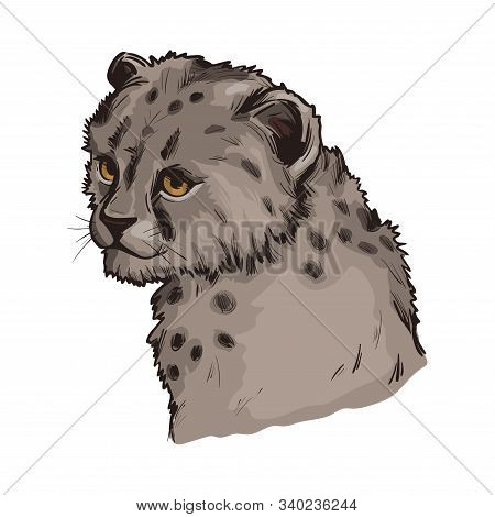 Cheetah Baby Tabby Cat From North Africa Isolated Hand Drawn Illustration. Southeast African Little