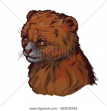 Puma Baby Tabby, Herpailurus Yagouaroundi Portrait Of Animal. Vector Drawing Of Puma. Eyra Profile F