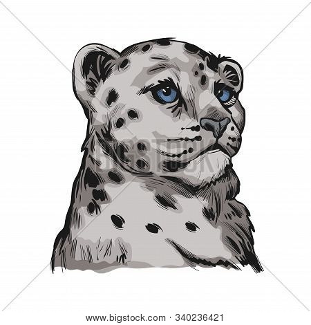 Snow Leopard Baby Tabby Portrait In Close Up Isolated Sketch. Vector Spotted Leopard Hand Drawni Llu