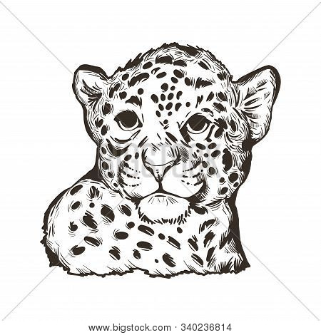 Jaguar Baby Tabby Portrait Closeup Of Animal Isolated Sketch Tshirt Print Monochrome Design. Panther