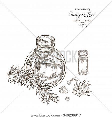 Juniper Tree Branch. Berries Of Juniper And Glass Bottle. Hand Drawn Medical Plants. Vector Illustra