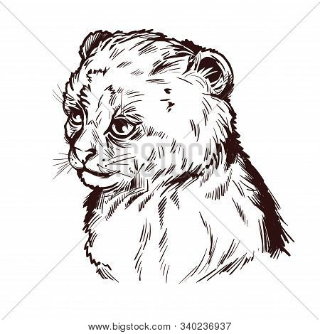 Puma Baby Tabby Yagouaroundi Portrait Of Animal Isolated Sketch T-shirt Print, Monochrome. Vector Dr