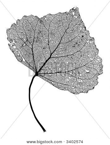 Leaf Skeleton Network