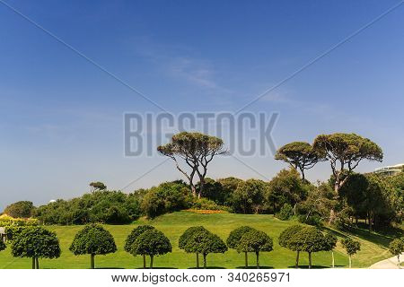 View Of The Green Area Of The Hotel Trees Figuratively Trimmed, Blue Sky, Summer Sunny Day