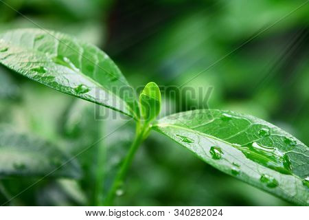 Young Plant In Sunlight, Growing Plant, Plant Seedling, Plant In The Morning, A Small Plant