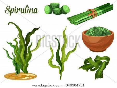 Spirulina Seaweed, Vector Sea Algae Food Plant. Dried Tablets And Powder Of Spirulina Seaweed For He
