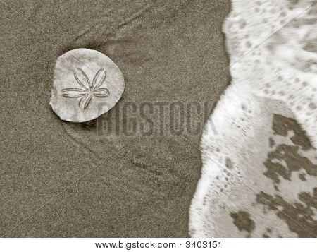 Seashore Discovery
