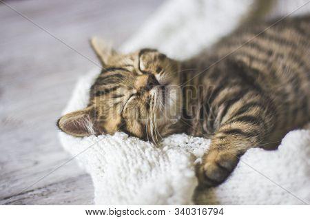 Tabby Cat Sleeping In A Blanket On A Wooden Floor, Soft Focus