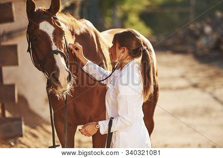 Using Stethoscope. Female Vet Examining Horse Outdoors At The Farm At Daytime.