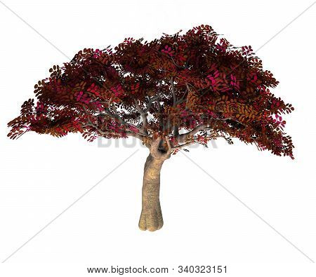 Persian Ironwood Tree 3d Illustration - Parrotia Persica Is A Deciduous Tree That Is Native To Iran