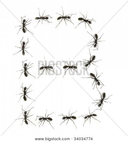 poster of alphabet letters spelled by ant in line