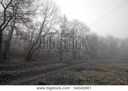 Autumn scenery in the forest with morning fog and rusty grass poster