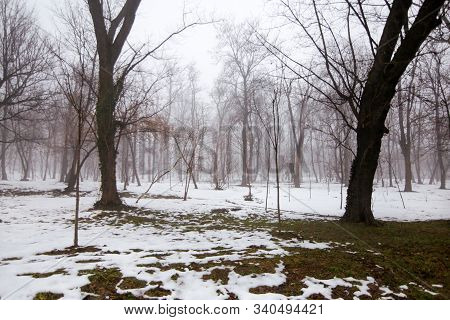 Winter Scenes, Nature Cold. Beautiful Winter Landscape With Snow Covered Trees On A Snowing Day. The