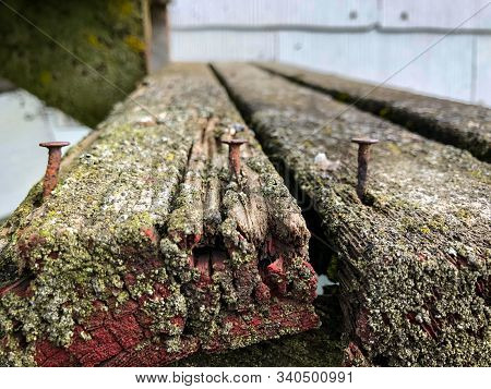 Rusty Nails In End Of Mossy Decayed Board