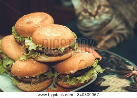 Homemade Beef Burgers With Lettuce. Cat Sit On Background