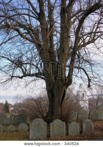 Tree And Family Plot