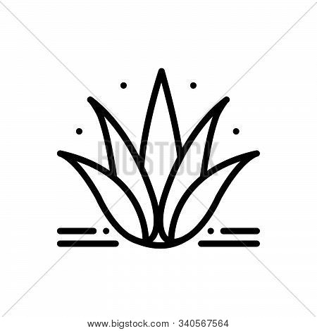Black Line Icon For Agave Plant Alovera Nature Cactus Herbal
