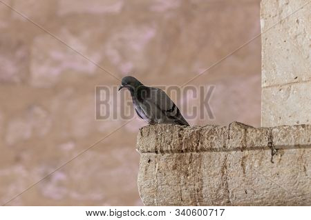 A Dove Sits On A Cornice Of A Column Of A Mosque Of The Muslim Part Of The Tomb Of The Grave Of The