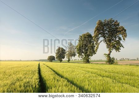 Sunrise field wheat chestnut Nature background trees Nature landscape countryside rural road Nature background color tranquil Nature background blue sky Nature background dawn morning Nature background tree sunrise sun Nature background Nature background.