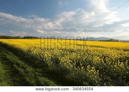 Spring landscape morning Nature background sunrise sunset clouds dusk Nature background spring yellow flowers field rural country road Nature background spring Nature background Nature background path Nature background rape field scenic Nature background.