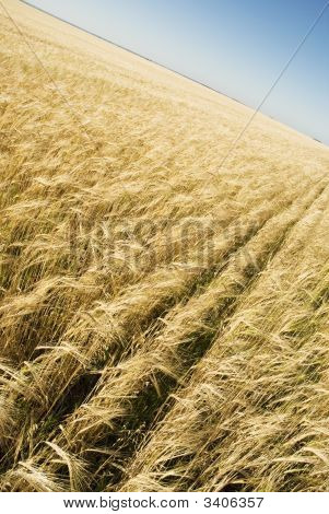 a blue sky and field nature concept poster