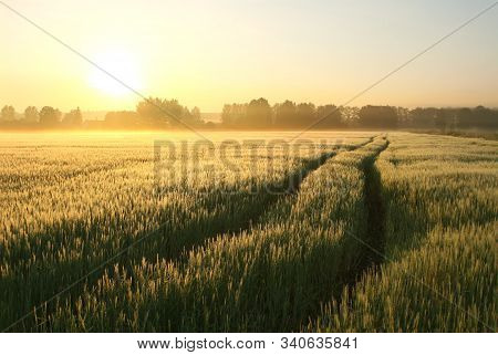 Spring sunrise field grain landscape sun morning sunrise sunset Nature background Nature background country rural road Nature background mist fog Nature background Nature background Nature background field sun countryside Nature background Nature dawn day