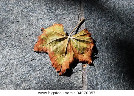 Autumn Leaf in Shadow