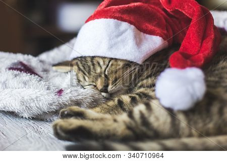 The Grey Kitten Sleeps In A New Years Cap On Soft Blanket