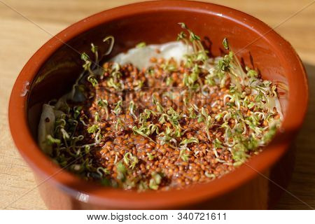 Cress Sprouts And Sprouts In A Bowl - Garden Cress Grown Yourself