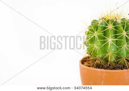 Small Cactus In Pot
