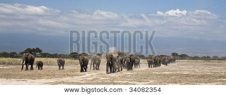 elephants marching