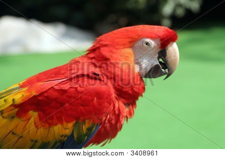 half body shot of parrot against green backdrop poster