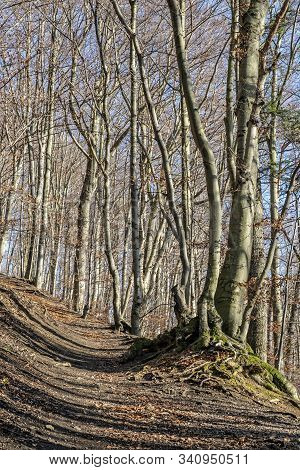 Footpath In Deciduous Forest, Vapec Hill, Strazov Mountains In Slovak Republic. Seasonal Natural Sce